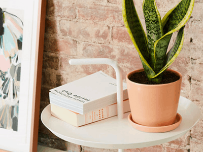 Having Snake Plant! Superb Amazing 7 Things You Can Do It Around (2021)