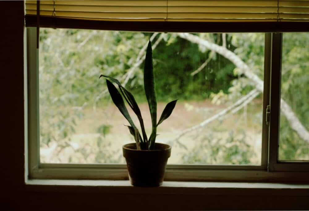 7 Of The Most Common Snake Plant Problems