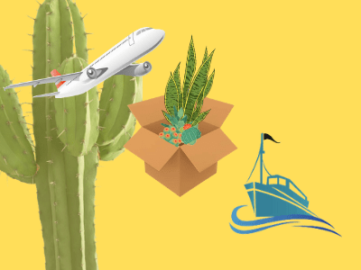 Can We Ship Snake Plant? Superb Amazing Way to Shipping Plants in 4 Steps (2021)
