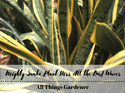 Mighty Snake Plants Hiss To All the Bad Waves! (2021)