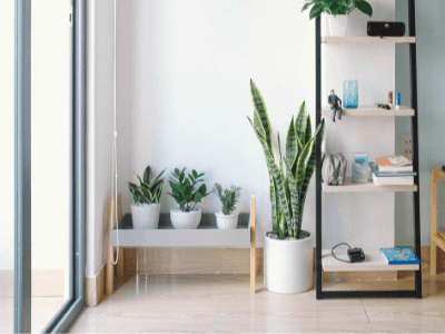 Find Out What These 6 Amazing Benefits of Having a Snake Plant Can Do for Your Bedroom! (2021)