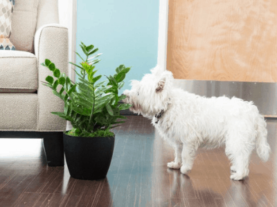 How to Keep Dogs Away from Your Houseplant? 3 Most Effective Ways You Should Try!