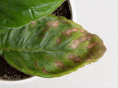 Brown Spots on Houseplant Leaves: Uncovering the 6 Causes and Ultimate Solutions!