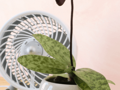 Can You Keep Houseplants Near A Fan? The Remarkable Benefit Of A Fan For Houseplants! [2021]