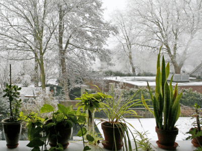 Is It Okay to Fertilize Indoor Plants During Winter? The Dependable Fertilizing Guide [2021]