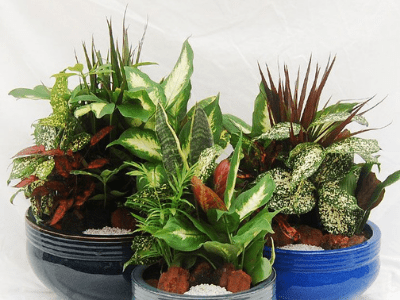 The Underrated Cool Houseplant Pairings: 7 Unique Companion Plant Ideas For Your Snake Plant!