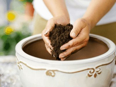DIY Houseplant Potting Soil Recipe: Your Promising Guide To The Perfect Soil 2021!