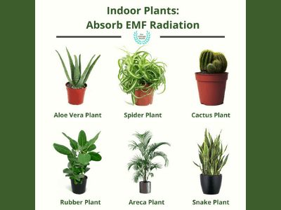 Plants That Absorb Radiation