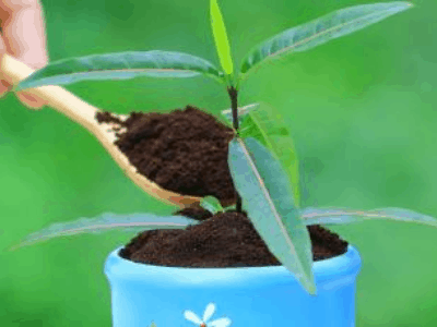 Coffee Grounds Like Which Indoor Plants? The Complete Facts About Coffee Grounds For Your Houseplants [2021]
