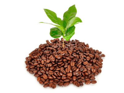 The Best Things To Do With Coffee Grounds And How Plants Love Them [2021]