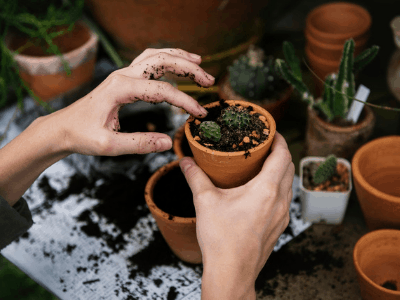 The Best Soil For Your Houseplant: Choosing From 4 Different Types Of Soil