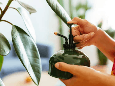 Should You Mist Indoor Plants? A Guide To Misting Carefully [2021]