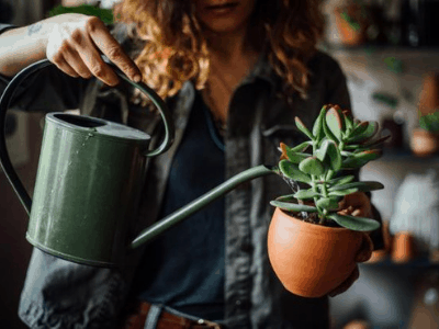 How To Water Your Houseplant? The Reliable Beginner's Guide To Houseplant Watering In 2021!