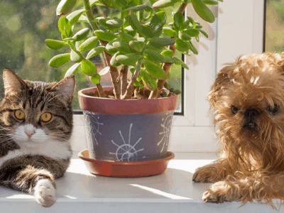 Are Succulents Safe For Cats And Dogs? 6 Succulents You Need To Watch Out For