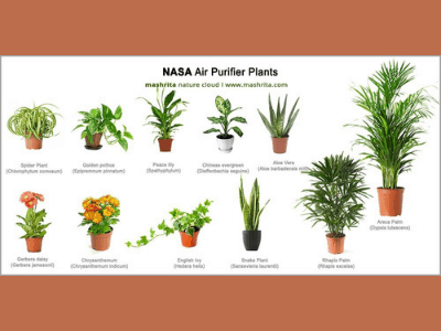 How Plants Improve Your Mental and Physical Health? 10 Amazing Plants To Improve Your Health