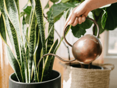 What Is The Best Water For Houseplant? 7 Water Quality Content To Consider