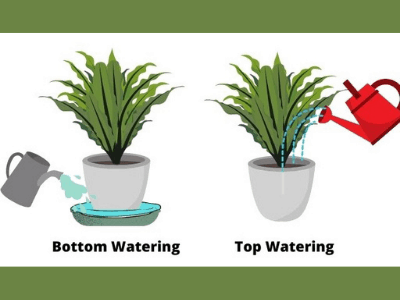 Indoor Watering Guide For Houseplants: 14 Important Things You Should Consider