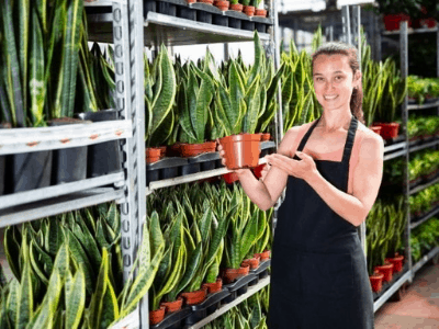 Dividing Snake Plant Pups 2021 Guide: Don't Let Your Adorable Snake Plant Pups Crowd In A Pot!