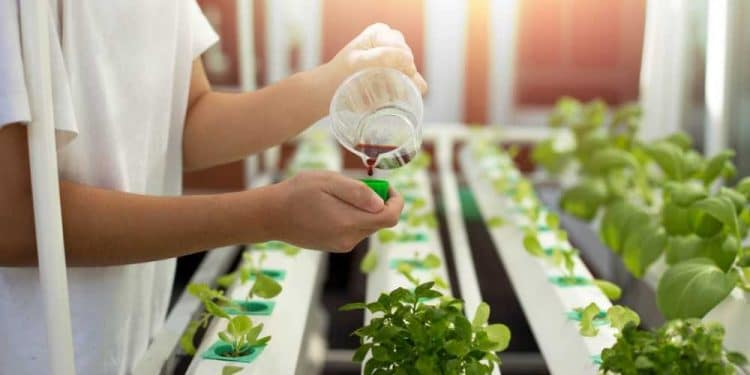 Leca For Better Houseplants: Why Should You Consider Using Leca (2021)