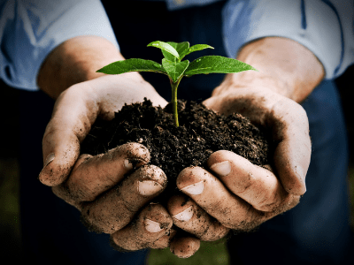 Choose The Best Soil To Make Your Houseplants Stunning! (2021)