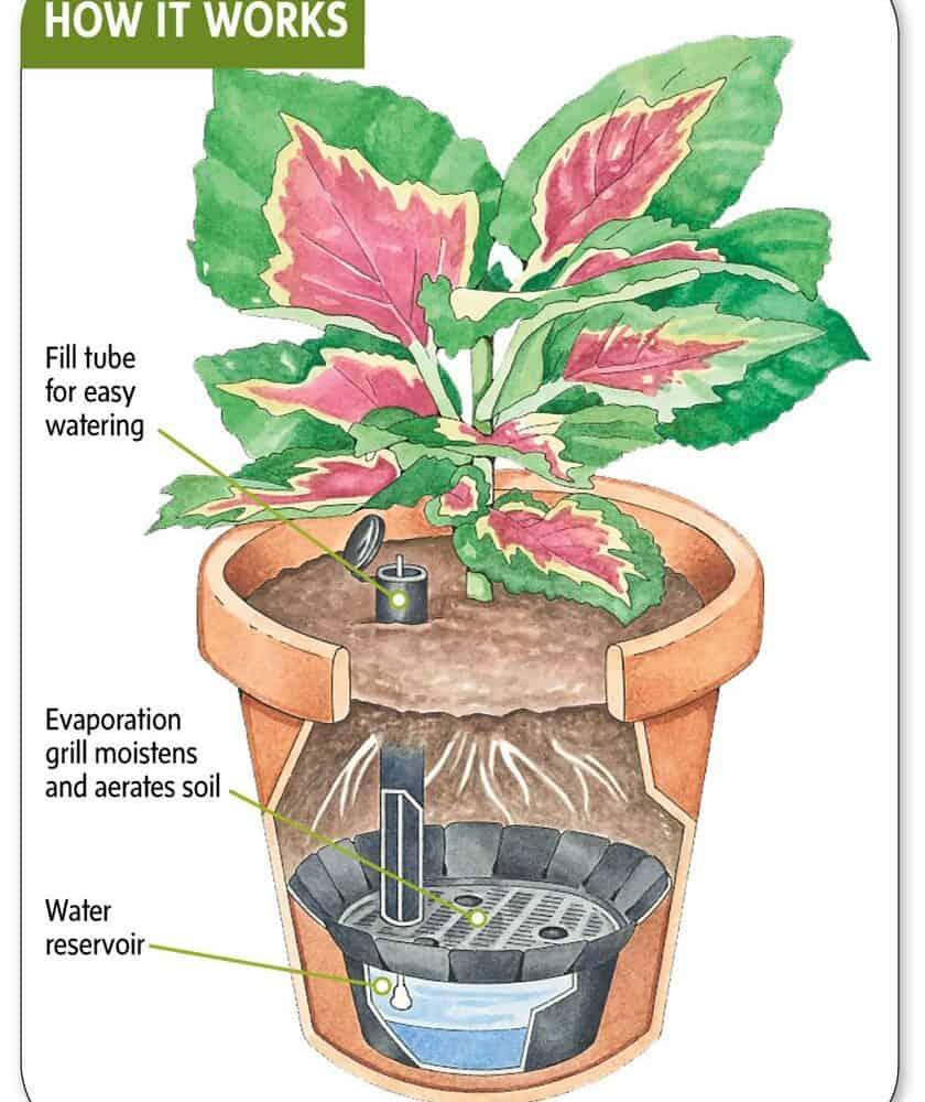 Self-Watering Pot Is A Simple Way To Keep Snake Plants Hydrated! (2021)
