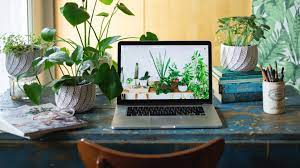 Care A Snake Plant As Desk Plant? Here Are The Superb Amazing Facts About It! (2021)