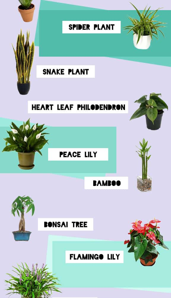 What Is Snake Plant Good For? Here Are Superb Fact About It! (2021)