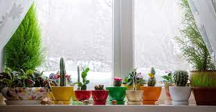 2021 Winter Houseplant Care: Topic For Keeping Your Inside Plant Alive