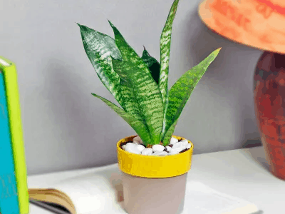 The Best Plastic Planters For Snake Plant On Amazon (2021)