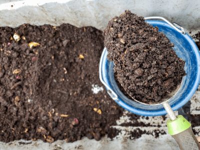 The Best Earthworm Castings On Amazon: Make Your Snake Plants Happy! (2021)