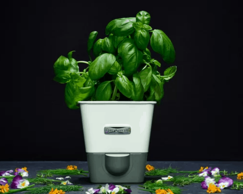 Choose Best Self-Watering Planter For You! (2021)