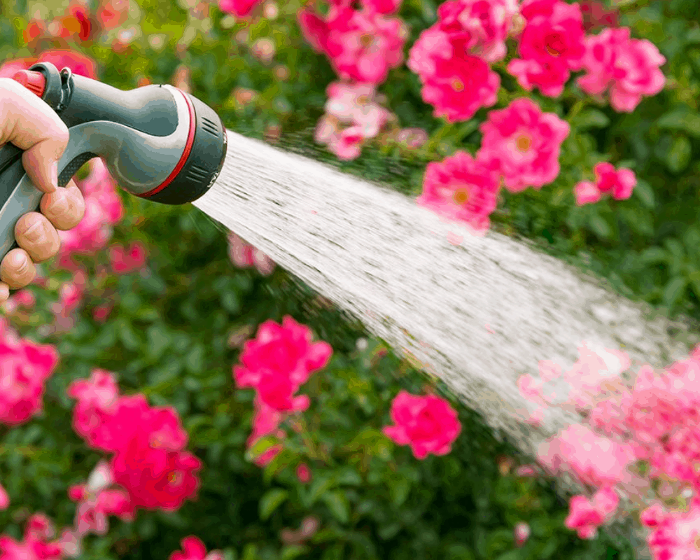 The Best Watering Wand You Should Have (2021)