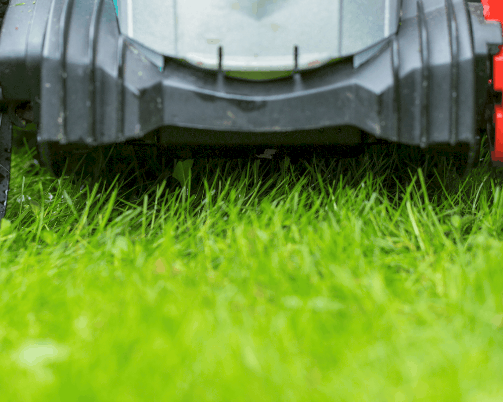5 Best Cordless Lawn Mowers You Can Buy on Amazon