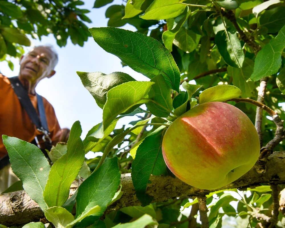 5 Best Fruit Picker Reviews on Amazon You Need To Know!