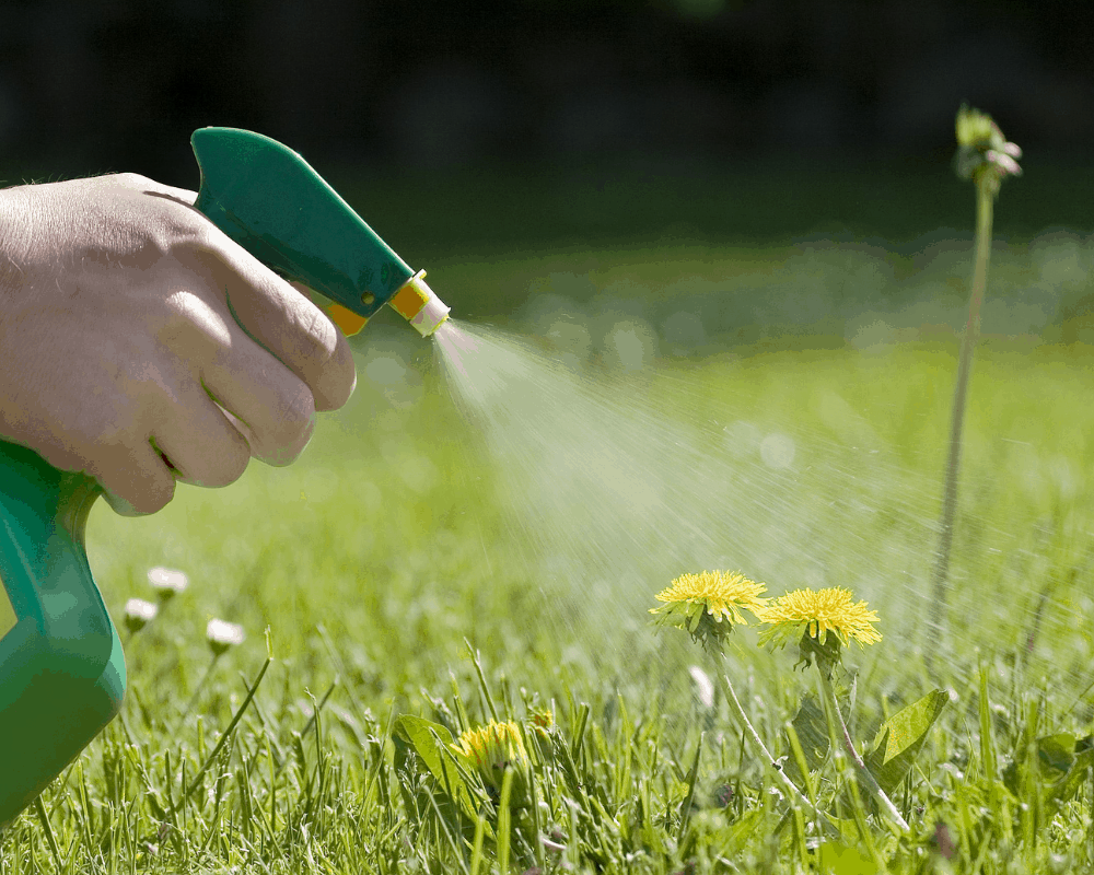 Weed Killers for Lawns and Gardens: 5 Best Products on Amazon
